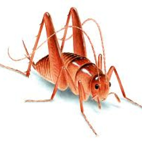 How Crickets Stopped The Prom