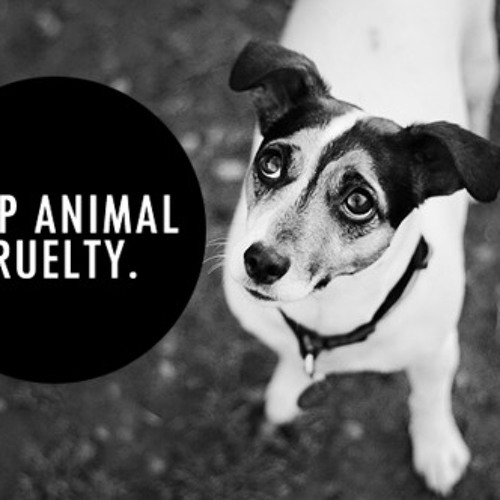 animals need respect from humans Animals should be treated with the same respect as humans do you agree with this view (220-260 words) it is a common belief that a human is superior to any other animal, mainly because of the extended intelligence that the former is gifted with.