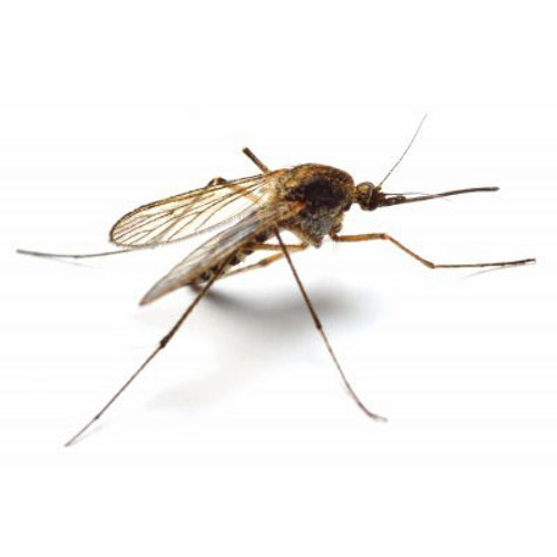 Mosquito & Wasp Control
