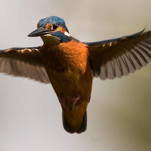 Kingfisher Riddim