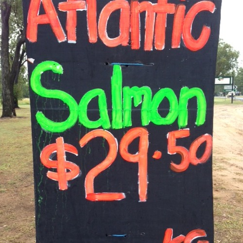 But Where Do I Buy The Atlantic Salmon? at Chinchilla