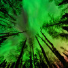 Green Sky-Chi oilgoson