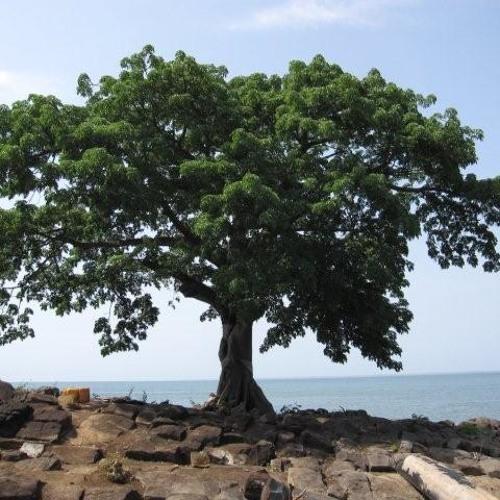 130215 Farmer TOK Climate Change and Sierra Leone