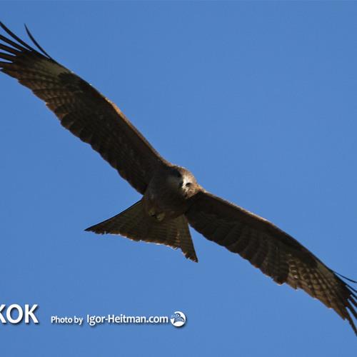 Wings (Rada & Ternovnik. CD UKOK 2013)