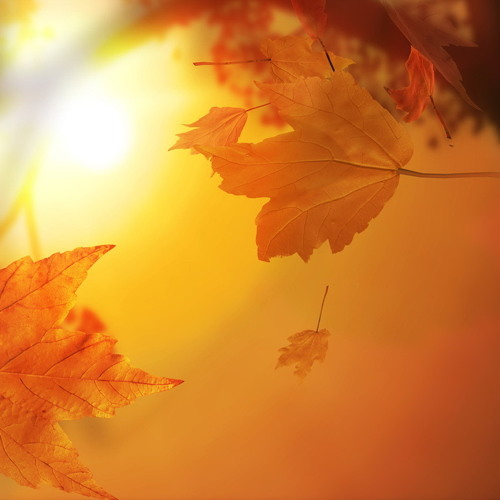 Chispa de otoño  //Paola y Pichy Sotomayor//