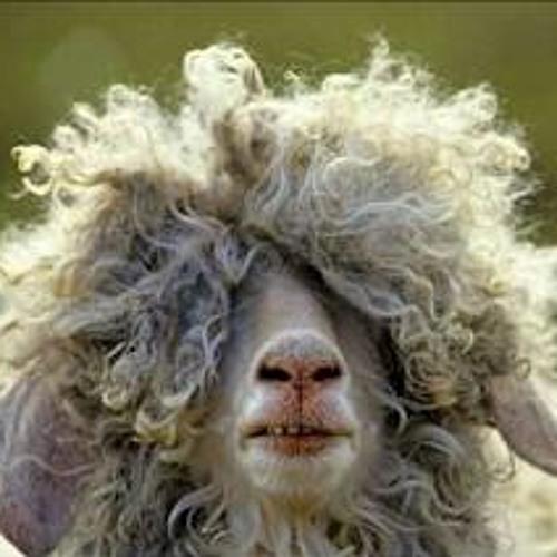 Cause Of Ewe