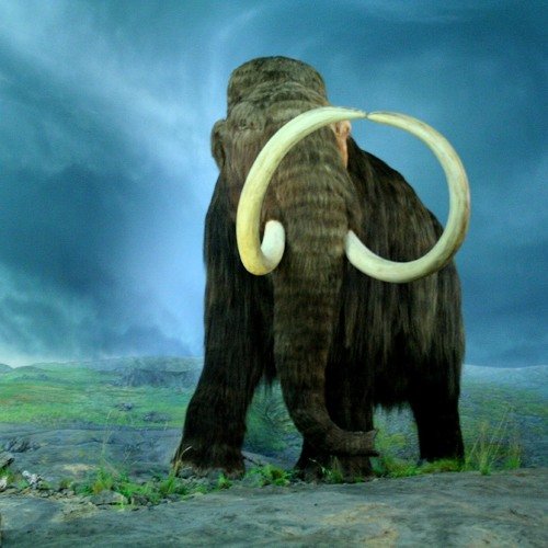 Ticon_we are the mammoth hunters (  Captain Hook & DJ Wasabi remix )