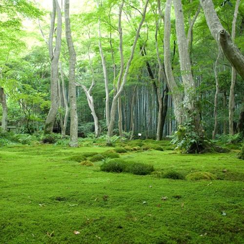 Enki - Green Jungle