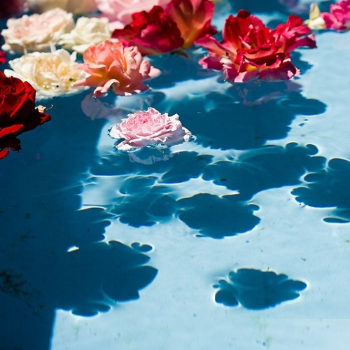 Taron-Trekka - Floating Flowers ::: FREE DOWNLOAD !!! :::