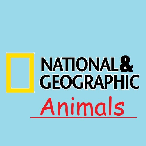 National & geographic - animals