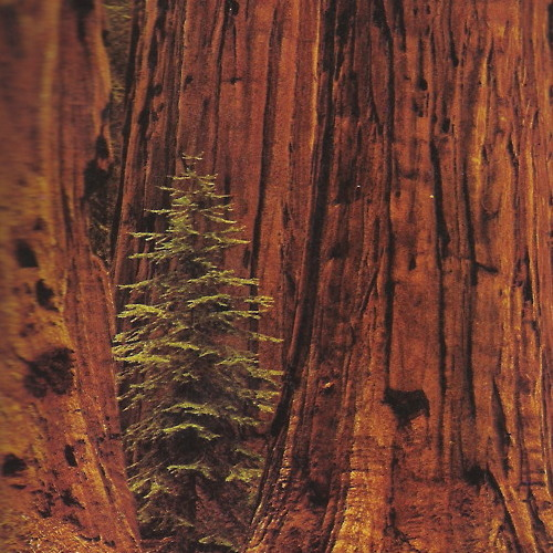 Tree Telepathy