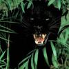 Black Leopard (Prod. by S.I.T.H)