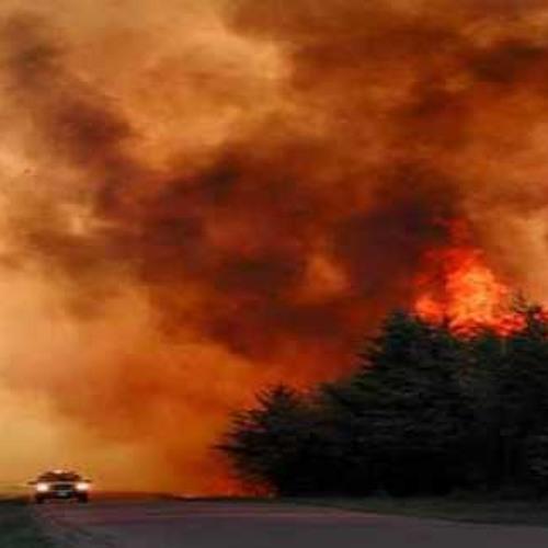Bushfire - Chayah Chante