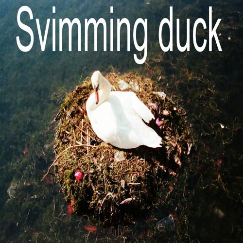 Svimming duck (free download)