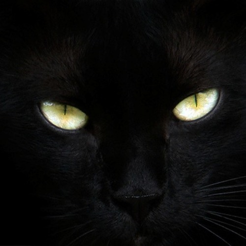 Olhos de Gato-violin