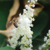 That weed that's spreading all over your yard… it might be Japanese knotweed!