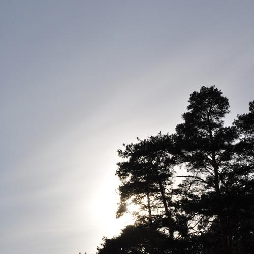 07.06.13 день в лесу (day in the wood)