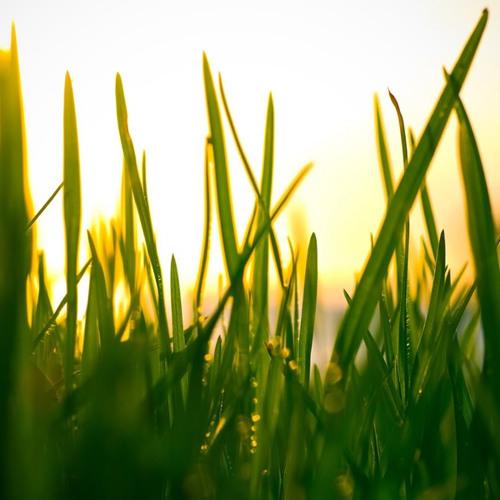 Mark Slee - Lawndaze: Staring Down Sunset [June 2013]
