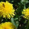 Honey Bee by Zee Avi (Cover)