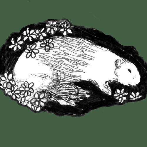 The Untimely Death Of Guinea Pigs