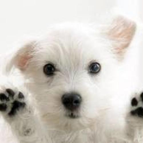 Basil the Cretian Dog