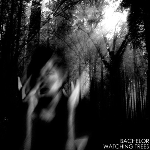 Bachelor - Watching Trees