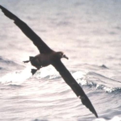 Albatros (demo)