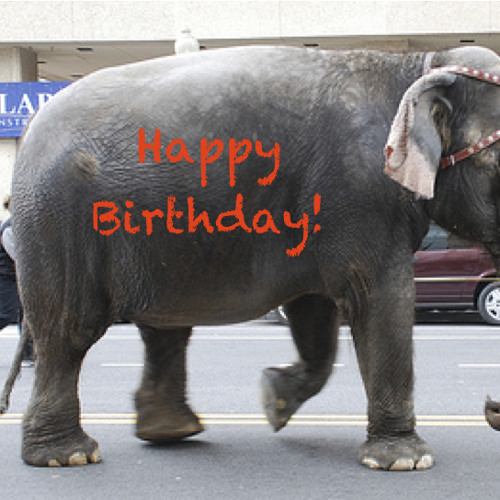 The Invisible Birthday Elephant Song (It's a joke song-not typical of my work)