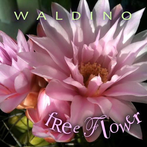 Waldino : Free Flower