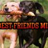 Janet Jackson - Alright (Best Friends Mix)
