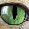 7 - Le Chat