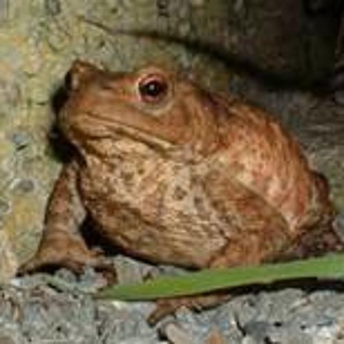 Toads (demo)