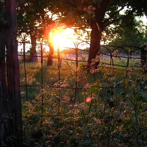In the Heavens Meadow