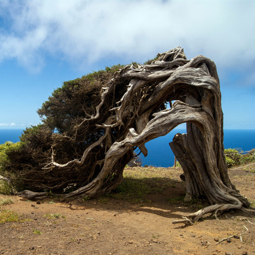 Tradiciones centenarias y magia volcánica en El Hierro
