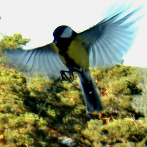 2.take Little Bird, N Version