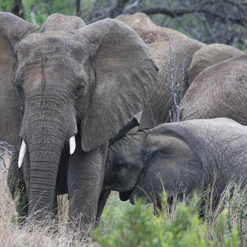 FE: Unravelling associations between body state and movement in African elephantsDavidJochowski