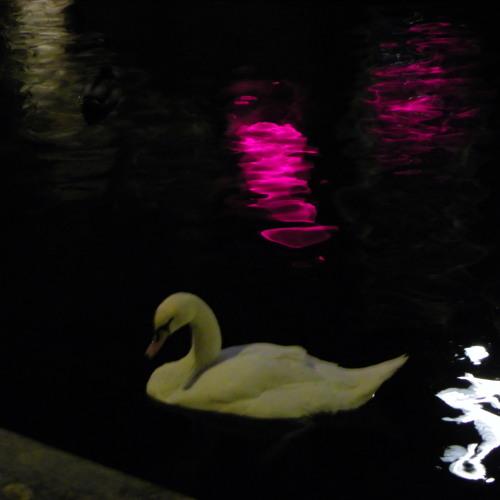 Nuit des Coeurs brillants