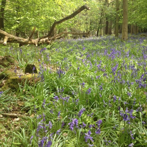 Sounds For A Million Bluebells