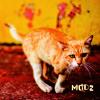 Modz - 05 - Madrugada