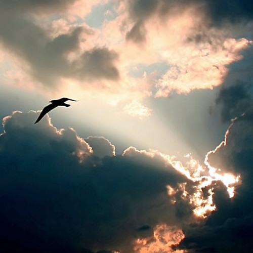 AidanS & Blue Apollo - Hear The Storm (FREE)