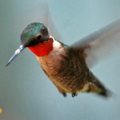 Birds audio backyard