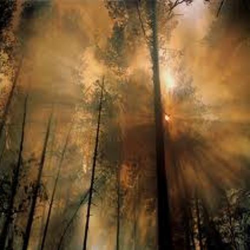 Fairy Forest Moonlight