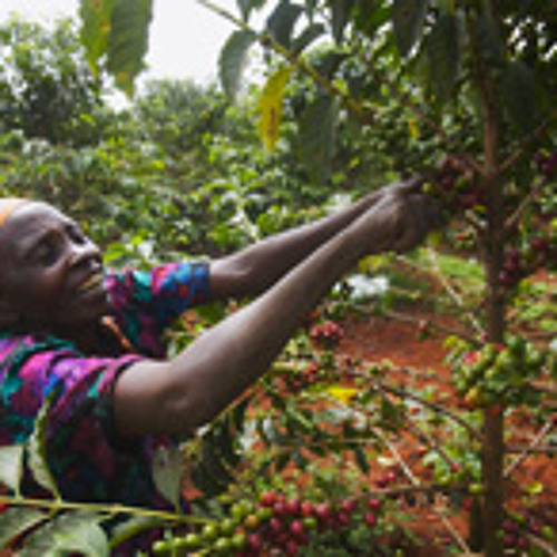 African Women Need Better Jobs