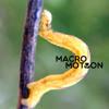 MacroMotion    The soundtrack to Teresa Franco's macro video.