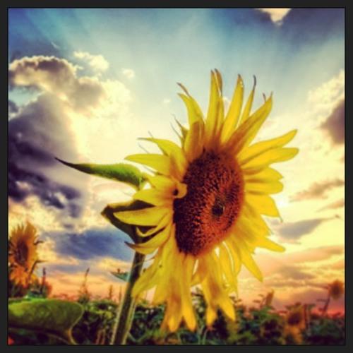 New 2013 Summer's Movement Chillstep