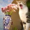 Gato miau como tono