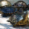 Turtle Traders 30 Years Later