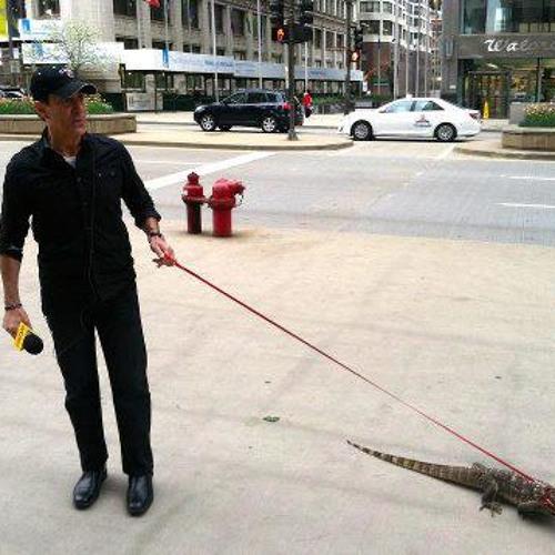 PushTheButtonDown Brandmeier with Lizard