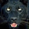 The Don Jaguar
