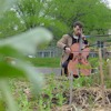 Music for Plants - Solomon Vromans